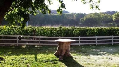 Morning fog over backyard vineyard